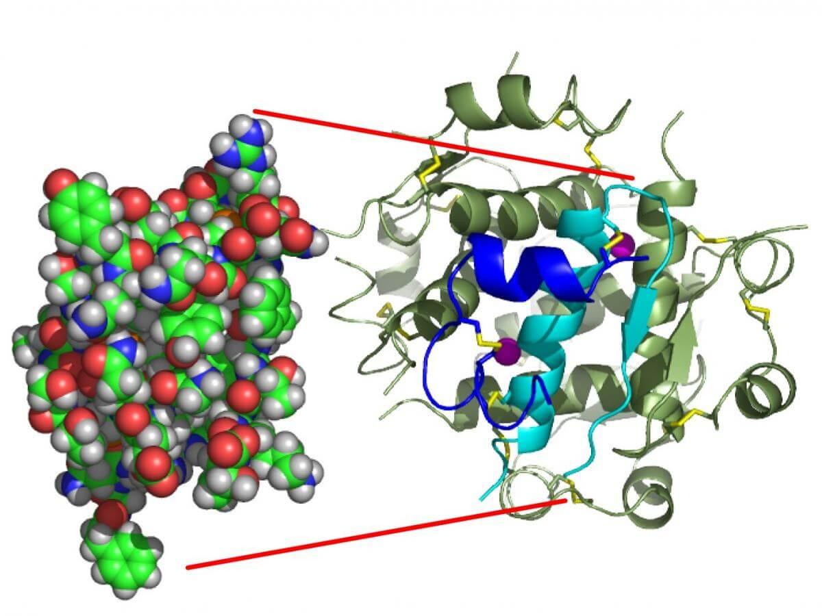 Insulin models Type 2 diabetes