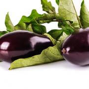 Eggplant with leaves