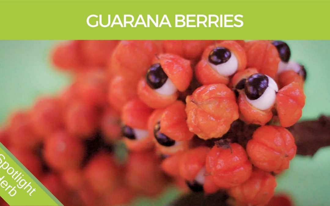 Guarana Berries