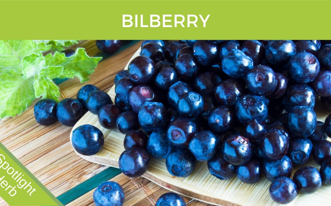 Bilberry Blueberry