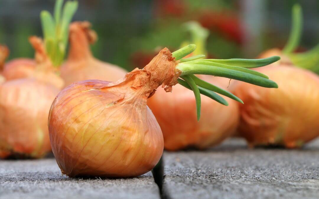 onion-1507519_1920.jpg