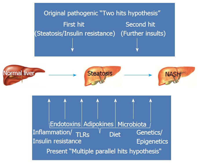 Fatty Liver Disease Progression
