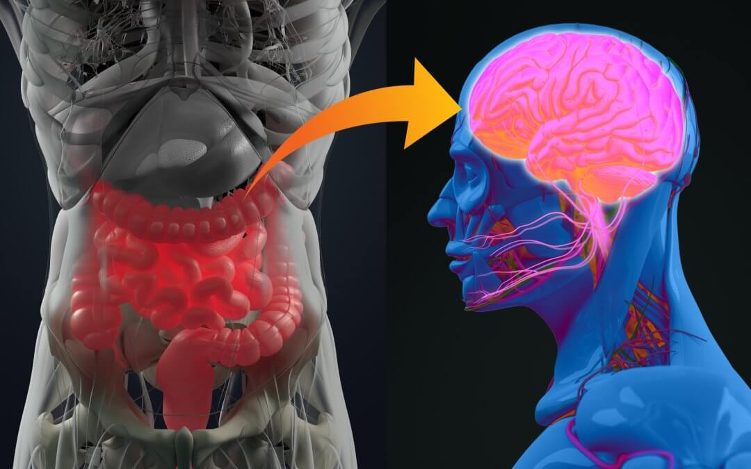 Gut Brain Axis and Mental Health Connection