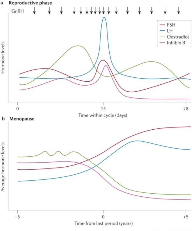 reproductive phase and menopause phase graph