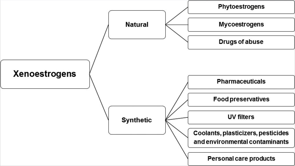 xenoestrogens flow chart